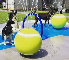 h2o fido doggie splash pad dog park