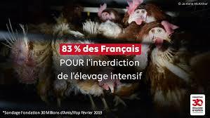 Élevage intensif : pour les Français... - 30 Millions d'Amis (Officiel) |  Facebook