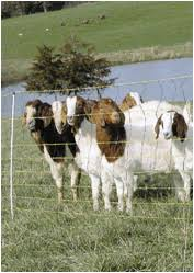 Browse Sheep Goat Poultry Netting Gallagher Electric Fence