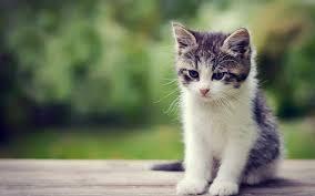 free cute little kitten