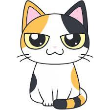 猫の捕獲|寝屋川市 | 大阪府寝屋川市の便利屋さん|便利屋銀さん