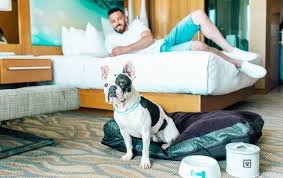 The Best Dog Friendly Hotels In The U S Travel Leisure