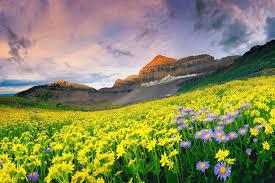 تحميل خلفيات الجبال المجال الزهور المناظر الطبيعية عريضة