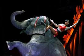 ringling bros and barnum and bailey circus