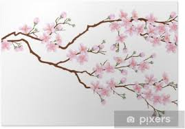 Horizontal Branch Of Cherry Blossoms Realistic Vector Illustration On Isolated Background Poster Pixers We Live To Change