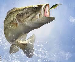 b fishing wallpaper backgrounds