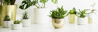 how to water plants while away 6 diy