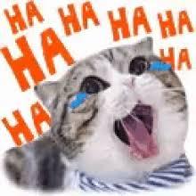 Laughing Cat GIFs | Tenor
