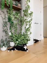 climbing plants safe for pets leaf