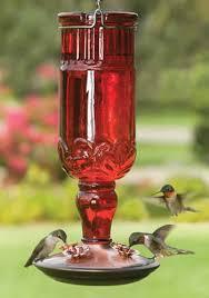 organic hummingbird food recipe