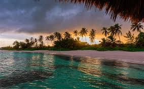 beach palm trees ocean sunset