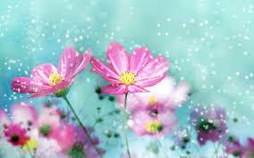 زهور وردية خلفيات حية For Android Apk Download