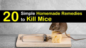 20 simple homemade remes to kill mice