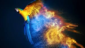 macaw wallpapers wallpapers hd