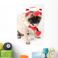 Christmas Pug Sticking Her Wall Decal Wallmonkeys Com