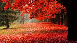 autumn red leaves autumn scenery