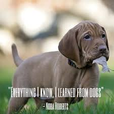 Dog Quotes — We Rounded up the Best of ...
