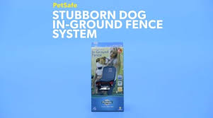Petsafe Stubborn Dog In Ground Fence System Free Shipping Chewy