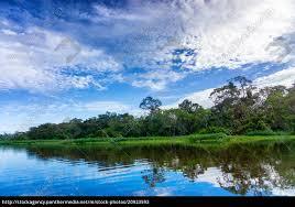 beautiful amazon landscape royalty