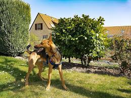 10 Different Types Of Dog Fences With Pictures Doggie Designer