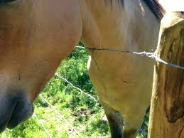 Fencing Pros And Cons The Best Horse Fence Listen To Your Horse