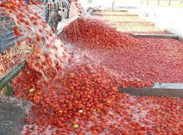 Daily Watch – Insurers take terrorism seriously, Dangote tomato ...