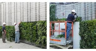 Green Wall Construction Living Wall Construction Vertical Gardens Ambius