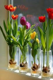Pin by Therese West on Beautiful   Growing tulips, Plants, Tulip bulbs
