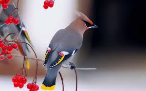 احدث صور عصافير جميلة و رائعة Hd 2020