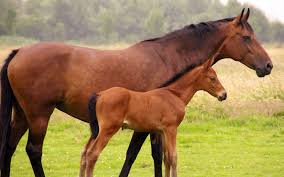 nutrition tips for a healthy foal