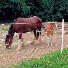 Pro Tek Electric Rope Buy 3 Get 1 Free Ramm Horse Fencing Stalls
