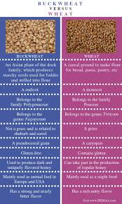 difference between buckwheat and wheat