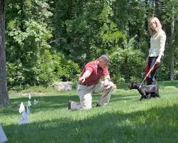 Pet Containment Training Flags Invisible Fence Boundary Flags