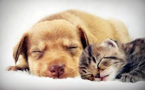 awesome adorable and inspirational quotes about pets for