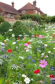 wildflower meadow wildflower garden