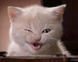 صور قطط مضحكة القطط حيوانات جميلة كارز