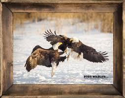 American Bald Eagles Print Eagle Photography Bald Eagle Fine Etsy