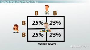punnett square definition exle