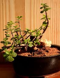 jade miniature in ceramic pot only