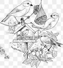 Eurasian Tree Sparrow Images Eurasian Tree Sparrow Transparent