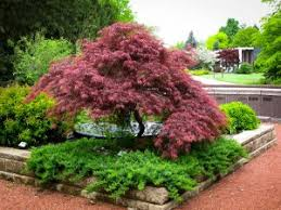 plants for a japanese garden the tree