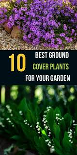 rose garden landscaping cost other