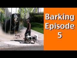Barking Episode 5 Barking At Dogs Behind Fences Youtube