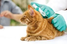 natural treatment of feline diabetes