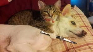 اضحك مع القطط مقاطع مضحكة للقطط2017 Funny Cats Compilation