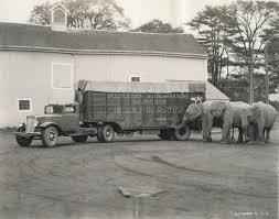 Adele Nelson's Dancing Elephants   Photograph   Wisconsin ...