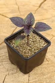 soilless growing ums learn how to