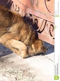 Dog Crawls Under The Fence Stock Photo Image Of Eyes 108304550