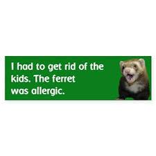 Ferret Bumper Stickers Cafepress