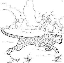 Cheetah Rent Kleurplaat Gratis Kleurplaten Printen